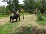 Поездка на слонах