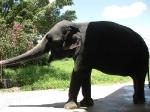 Веселый слоник