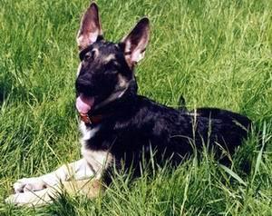 ветеринария онлайн