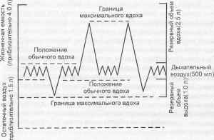 Процесс дыхания в цифрах. Значение воздухоносных путей