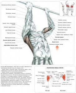 Подтягивание руки на ширине плеч