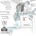 Отжимания на брусьях техника какие мышцы работают